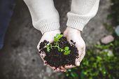 Gardener With Vegetable Seedling. Spring Garden. Plant Seedling In Farmers Hands. poster