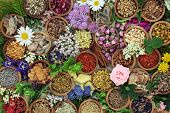 Herbal medicine with herbs and flowers used in chinese and natural alternative remedies with fresh h poster