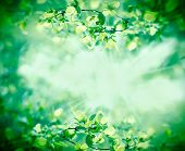 Young Spring Leaves In Forest Lit By Sunbeams - Sun Rays poster