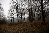 Landscape With Beautiful Fog In Forest On Hill Or Trail Through A Mysterious Winter Forest With Autu poster
