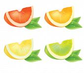 Realistic vector piece of citrus with fresh leaves