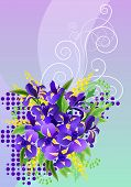 Big  bunch of irises and mimosa with free space for your text