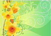 Floral daffodil spring background