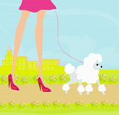 foto of poodle skirt  - fashion girl legs with her dog Shopping  - JPG