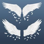 Realistic Wings. White Isolated Pair Of Angel Wings With Falling Feathers, 3d Bird Wings Design. Vec poster