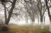 Photo Of A Dense Fog With Dense Fog In Warm Shades poster