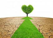 Arrow from green grass through dry country with cracked soil. Concept of change climate or global wa poster