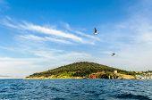 Prince's island