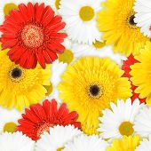 Seamless Background Of Motley Flowers