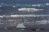Icebergs In The Disco Bay Ilulissat