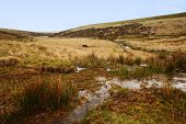 dartmoor national park dangerous bog