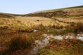 dartmoor national park dangerous bog