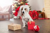Dog near christmas tree. Pet at home, happy New Year and merry Christmas poster