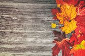 Autumn leaves background top view of old wooden rustic wood background texture and red and yellow fo poster