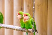 Parrot Bird In The Zoo. A Bird In Captivity. Zoo Animals. poster