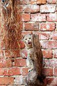 nervöse Katze