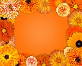 Flower Frame With Orange Flowers