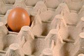 Egg carton with egg.