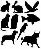 Nine Animals Black Silhouettes