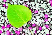 Leaf On Rock