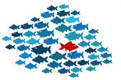 stock photo of metaphor  - One fish swim in opposite direction - JPG