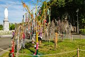 Tree Of Rosaries