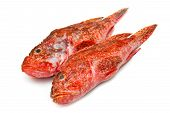 stock photo of redfish  - a couple of Redfish isolated on white background - JPG