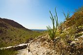 pic of piestewa  - Cactus on the Side of Piestewa  - JPG