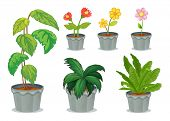 stock photo of six-petaled  - Illustration of six pots with plants on a white background - JPG