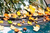 Autumn Leaves On Car Hood