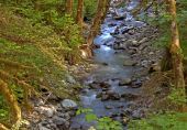 Silky Gentle Mountain Stream