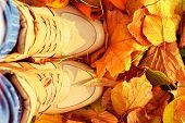 Autumn Background With Fall Leaves And Woman Shoes Boots Golden Yellow Colors Seasonal