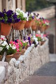 Row Of Colourful Flower Pots On A Street