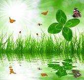 Fresh green grass with clover and butterflies