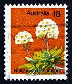 Postage Stamp Australia 1975 Helichrysum Thomsonii, Wild Flower