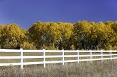 Blue Sky, Yellow Trees, White Fence.