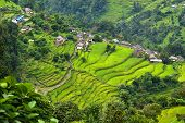 A Gurung Village Between Rice Fields In The Himalayas, Nepal