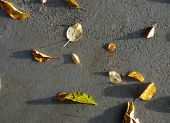 Autumn leaves on a fresh prepared concrete