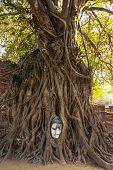 Buddha head at Ayuthaya