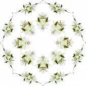 Abstract Floral Pattern isolated on white  background with copy space