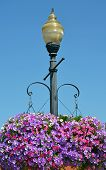 Street Light With Hanging Petunia Flower Baskets