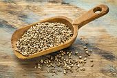 a rustic scoop of hemp seeds against a grunge painted wood background