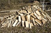 Fresh Firewood Stack In Farm Garden
