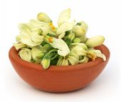 Edible Moringa Flower On A Brown Bowl