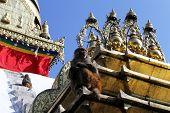Monkeys And Stupa