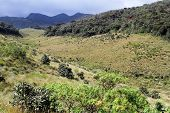 Ravine In Horton Plains