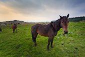 Horses In Irish Countryside