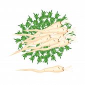 Fresh Pile Of Parsley Root On White Background