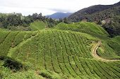 stock photo of cameron highland  - Road and tea plantation in Cameron Highlands Malaysia - JPG