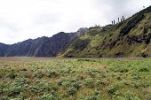picture of bromo  - Green grass in caldera near volcano Bromo Indonesia - JPG